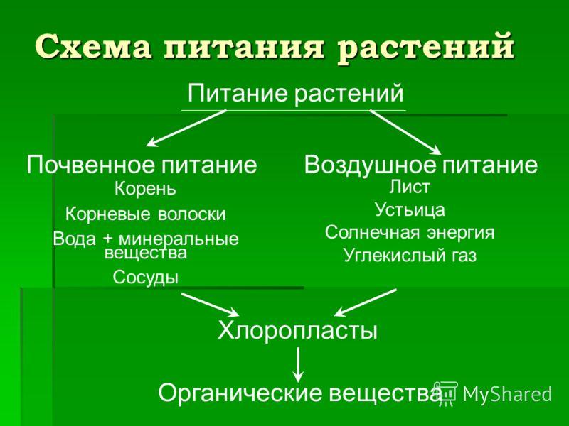 Схема питания растений Питание