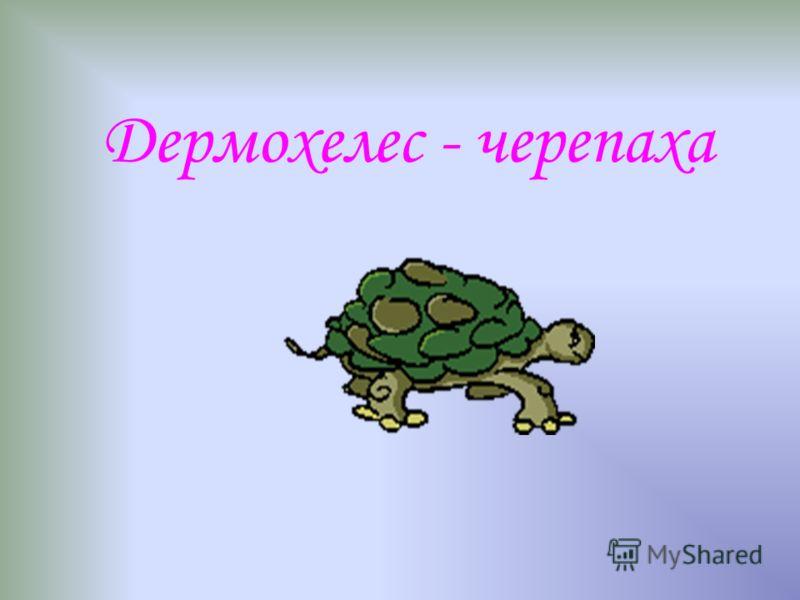 Дермохелес - черепаха