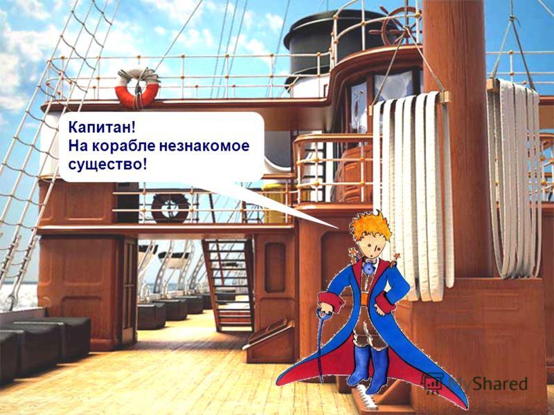 Капитан! На корабле незнакомое существо!