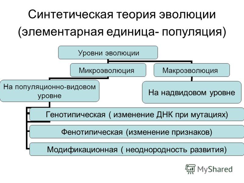 Синтетическая теория эволюции (элементарная единица- популяция) Уровни эволюции Микроэволюция На популяционно- видовом уровне Генотипическая ( изменение ДНК при мутациях) Фенотипическая (изменение признаков) Модификационная ( неоднородность развития)