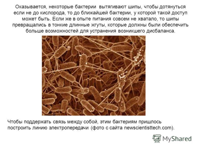 Оказывается, некоторые бактерии вытягивают шипы, чтобы дотянуться если не до кислорода, то до ближайшей бактерии, у которой такой доступ может быть. Если же в опыте питания совсем не хватало, то шипы превращались в тонкие длинные жгуты, которые должн