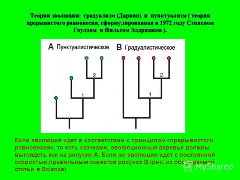 Теории эволюции: градуализм (Дарвин) и пунктуализм ( теория прерывистого равновесия, сформулированная в 1972 году Стивеном Гоулдом и Нильсом Элдриджем ). Если эволюция идет в соответствии с принципом «прерывистого равновесия», то есть скачками, эволю
