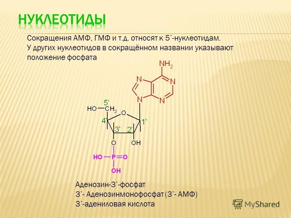Сокращения АМФ, ГМФ и т.д. относят к 5-нуклеотидам. У других нуклеотидов в сокращённом названии указывают положение фосфата Аденозин-3-фосфат 3- Аденозинмонофосфат (3- АМФ) 3-адениловая кислота