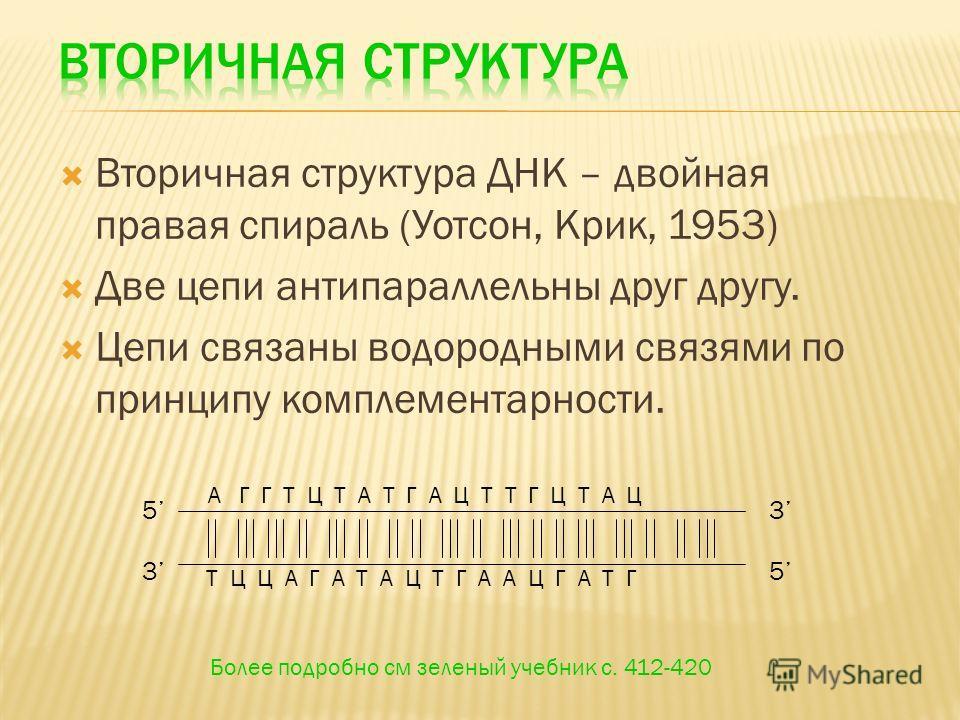 Вторичная структура ДНК – двойная правая спираль (Уотсон, Крик, 1953) Две цепи антипараллельны друг другу. Цепи связаны водородными связями по принципу комплементарности. 5 53 3 А Г Г Т Ц Т А Т Г А Ц Т Т Г Ц Т А Ц Т Ц Ц А Г А Т А Ц Т Г А А Ц Г А Т Г