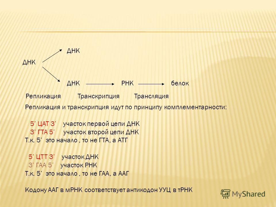 ДНК Репликация РНК Транскрипция белок Трансляция Репликация и транскрипция идут по принципу комплементарности: 5 ЦАТ 3 участок первой цепи ДНК 3 ГТА 5 участок второй цепи ДНК Т.к. 5 это начало, то не ГТА, а АТГ 5 ЦТТ 3 участок ДНК 3 ГАА 5 участок РНК