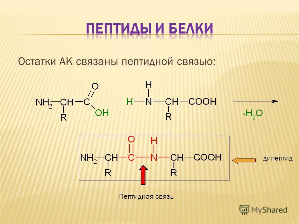 Остатки АК связаны пептидной связью: Пептидная связь дипептид