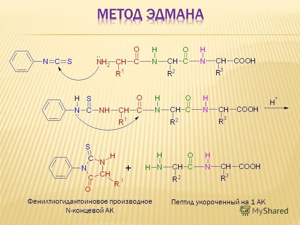 Фенилтиогидантоиновое производное N-концевой АК Пептид укороченный на 1 АК