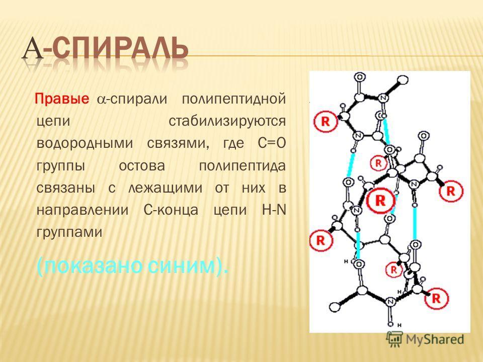 Правые -спирали полипептидной цепи стабилизируются водородными связями, где С=О группы остова полипептида связаны с лежащими от них в направлении С-конца цепи H-N группами (показано синим).
