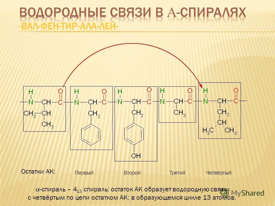 Первый Второй Третий Четвёртый Остатки АК: -спираль – 4 13 спираль: остаток АК образует водородную связь с четвёртым по цепи остатком АК; в образующемся цикле 13 атомов.