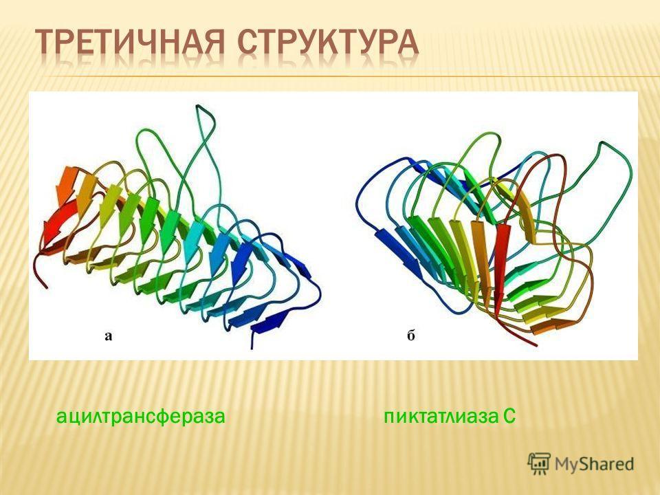 ацилтрансфераза пиктатлиаза С