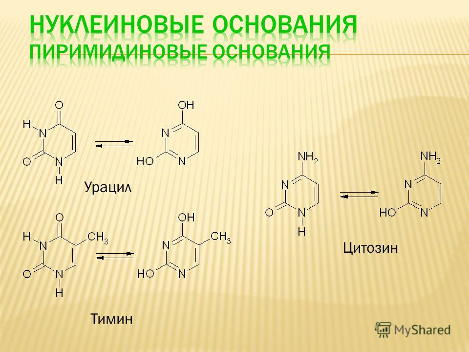 Урацил Тимин Цитозин
