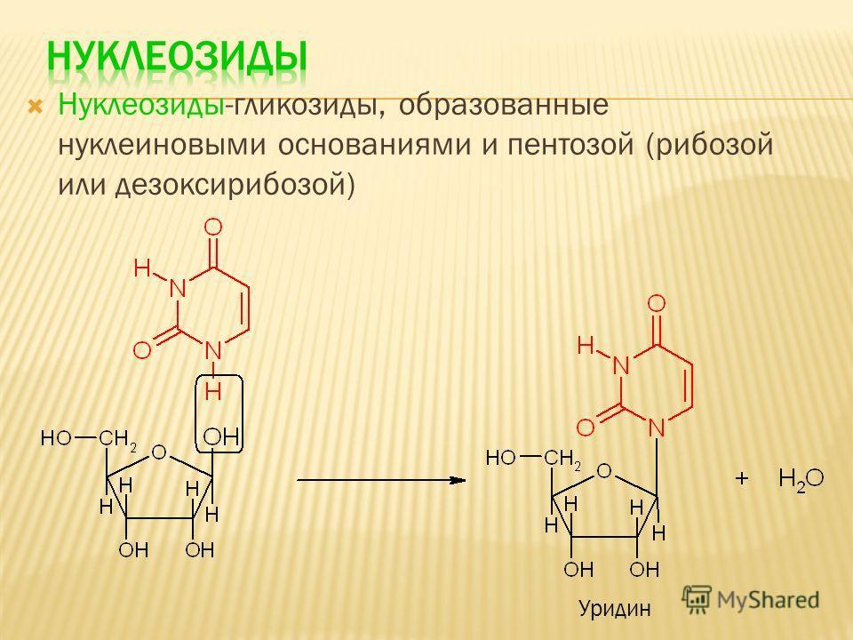 Нуклеозиды-гликозиды, образованные нуклеиновыми основаниями и пентозой (рибозой или дезоксирибозой) Уридин
