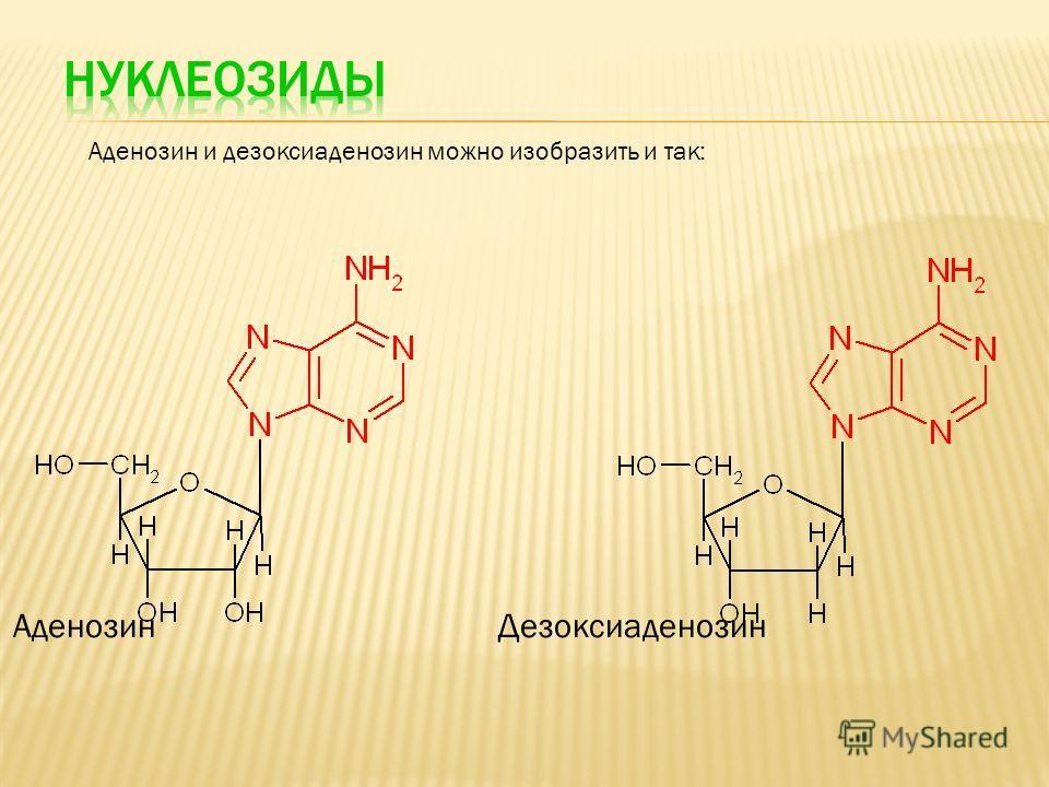 Аденозин и дезоксиаденозин можно изобразить и так: