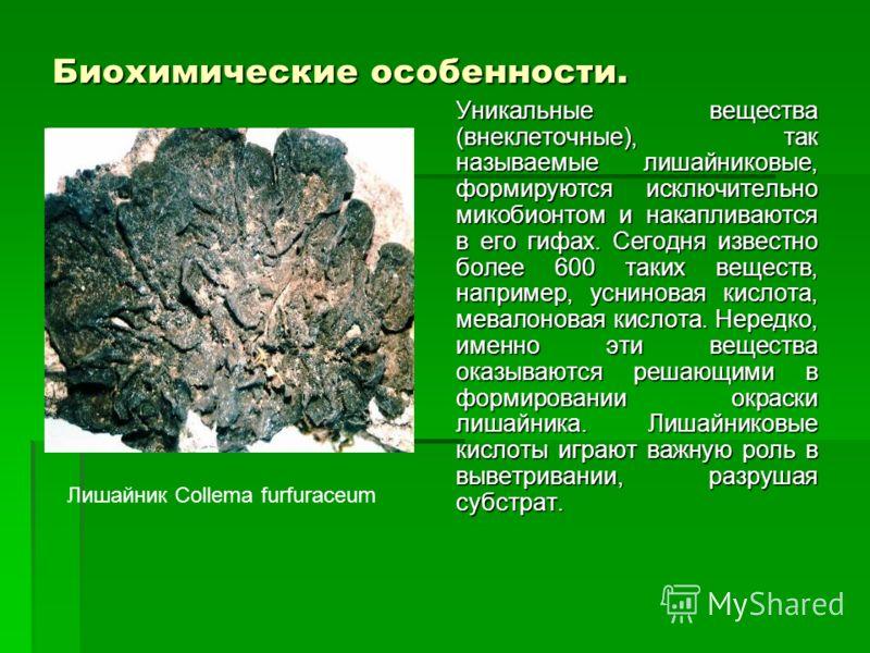 Биохимические особенности. Уникальные вещества (внеклеточные), так называемые лишайниковые, формируются исключительно микобионтом и накапливаются в его гифах. Сегодня известно более 600 таких веществ, например, усниновая кислота, мевалоновая кислота.