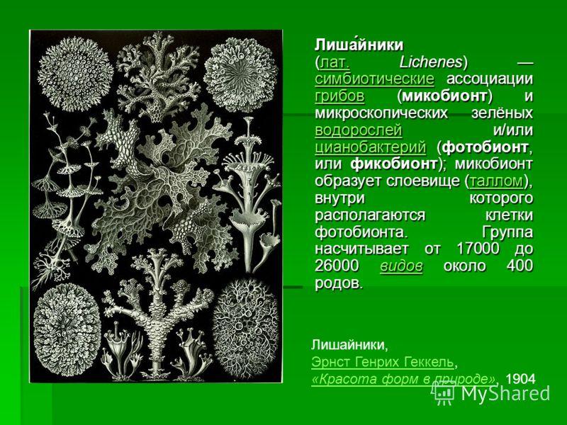 Лиша́йники (лат. Lichenes) симбиотические ассоциации грибов (микобионт) и микроскопических зелёных водорослей и/или цианобактерий (фотобионт, или фикобионт); микобионт образует слоевище (таллом), внутри которого располагаются клетки фотобионта. Групп