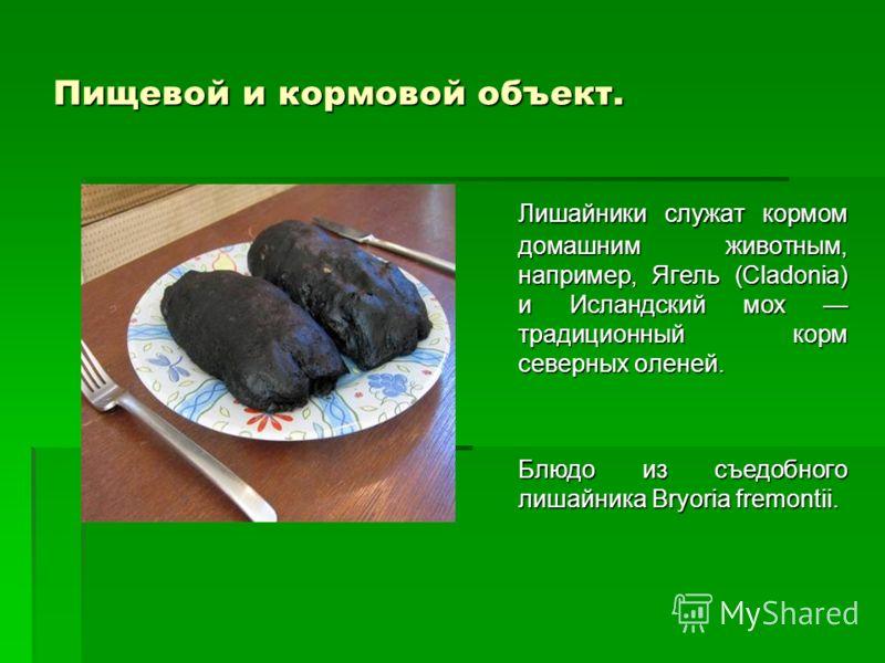 Пищевой и кормовой объект. Лишайники служат кормом домашним животным, например, Ягель (Cladonia) и Исландский мох традиционный корм северных оленей. Блюдо из съедобного лишайника Bryoria fremontii.