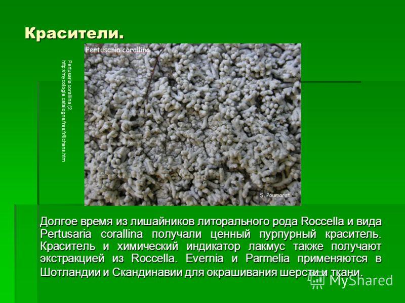 Красители. Долгое время из лишайников литорального рода Roccella и вида Pertusaria corallina получали ценный пурпурный краситель. Краситель и химический индикатор лакмус также получают экстракцией из Roccella. Evernia и Parmelia применяются в Шотланд