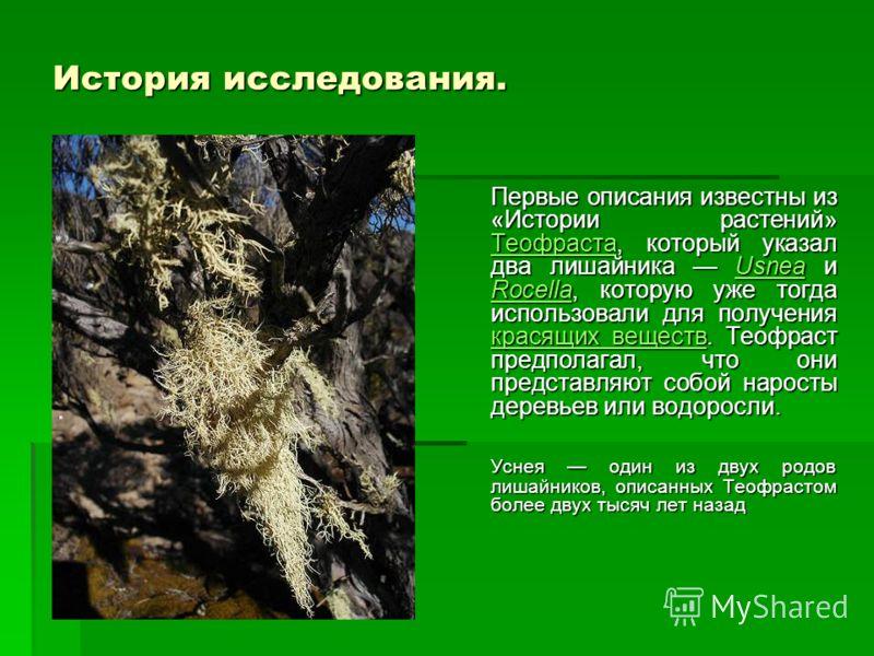 История исследования. Первые описания известны из «Истории растений» Теофраста, который указал два лишайника Usnea и Rocella, которую уже тогда использовали для получения красящих веществ. Теофраст предполагал, что они представляют собой наросты дере