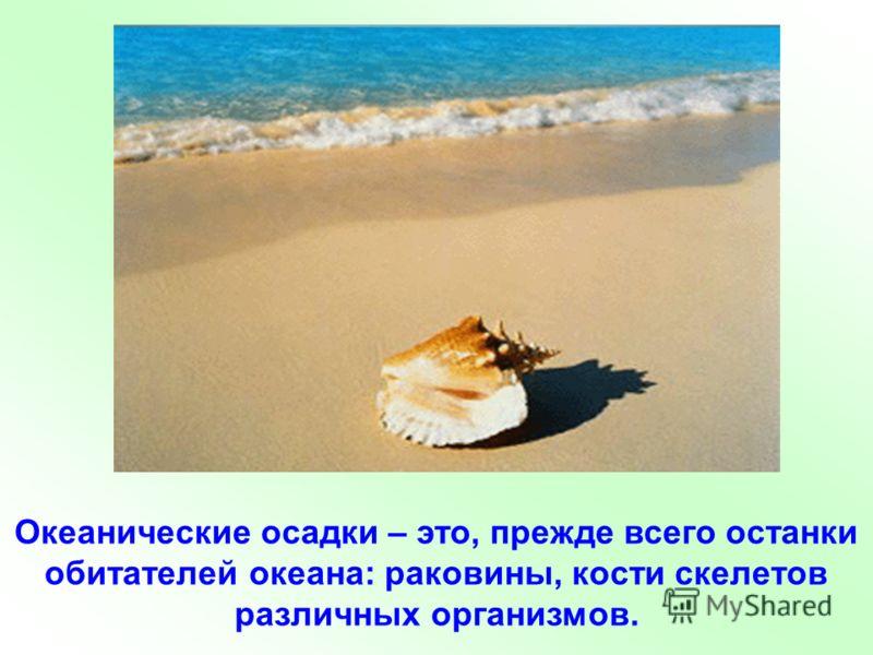 Океанические осадки – это, прежде всего останки обитателей океана: раковины, кости скелетов различных организмов.