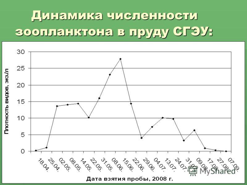 Динамика численности зоопланктона в пруду СГЭУ: Динамика численности зоопланктона в пруду СГЭУ: