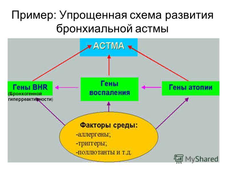 Пример: Упрощенная схема развития бронхиальной астмы (Бронхогенной гиперреактивности)