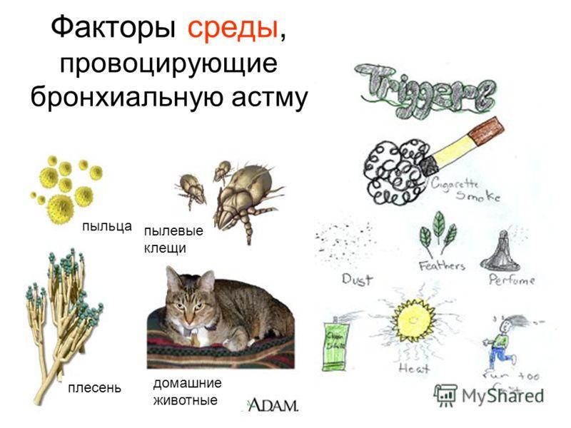 Факторы среды, провоцирующие бронхиальную астму пыльца плесень домашние животные пылевые клещи