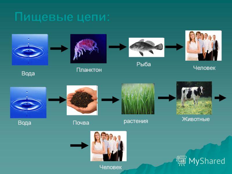Вода Планктон Рыба Человек ВодаПочва растения Животные Человек