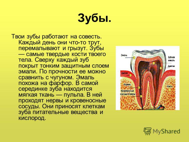 Зубы. Твои зубы работают на совесть. Каждый день они что-то трут, перемалывают и грызут. Зубы самые твердые кости твоего тела. Сверху каждый зуб покрыт тонким защитным слоем эмали. По прочности ее можно сравнить с чугуном. Эмаль похожа на фарфор. В с