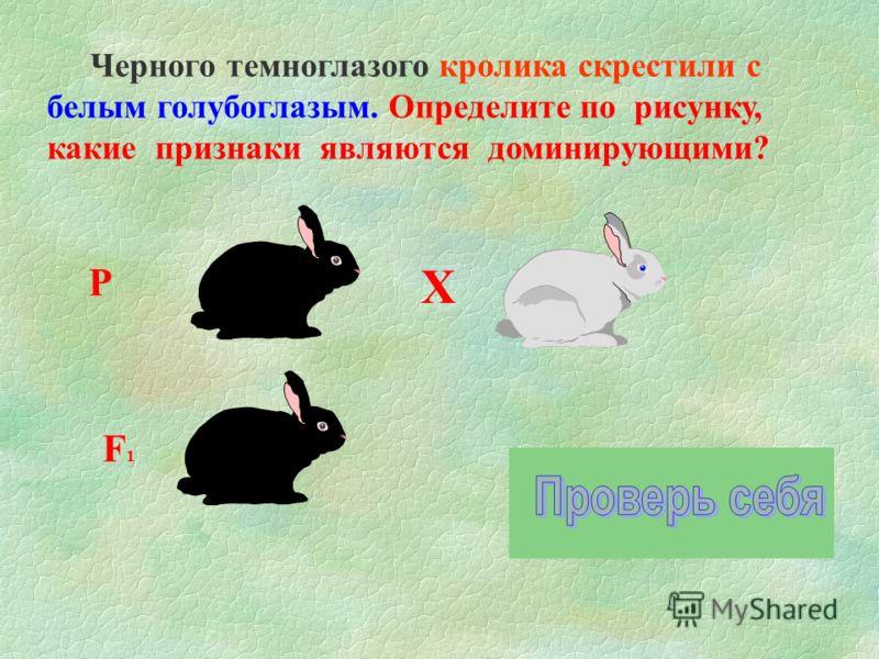 Р Х F1F1 Черного темноглазого кролика скрестили с белым голубоглазым. Определите по рисунку, какие признаки являются доминирующими?