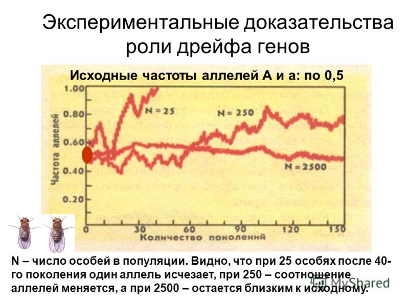 Экспериментальные доказательства роли дрейфа генов Исходные частоты аллелей А и а: по 0,5 N – число особей в популяции. Видно, что при 25 особях после 40- го поколения один аллель исчезает, при 250 – соотношение аллелей меняется, а при 2500 – остаетс