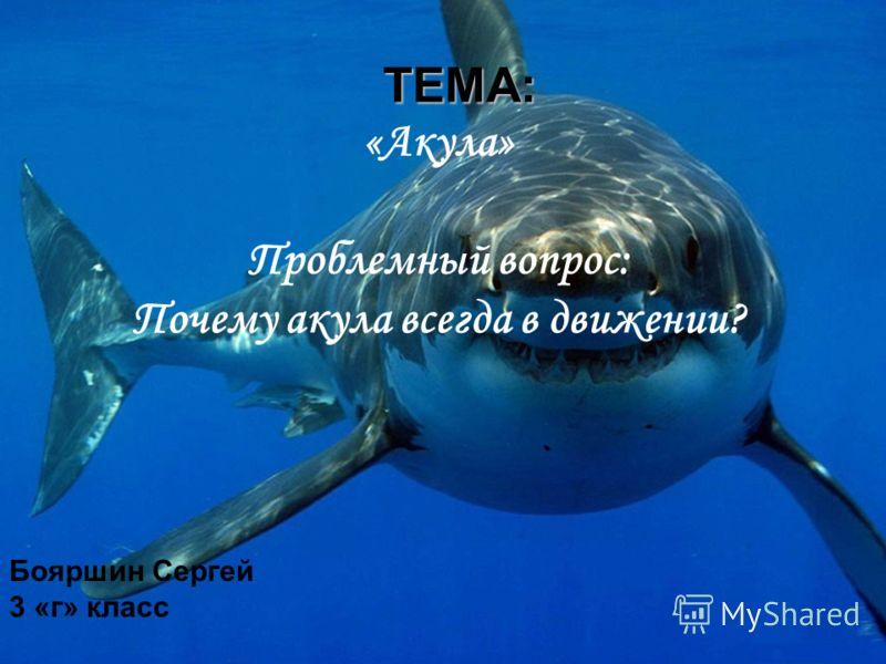 ТЕМА: ТЕМА: «Акула» Проблемный вопрос: Почему акула всегда в движении? Бояршин Сергей 3 «г» класс