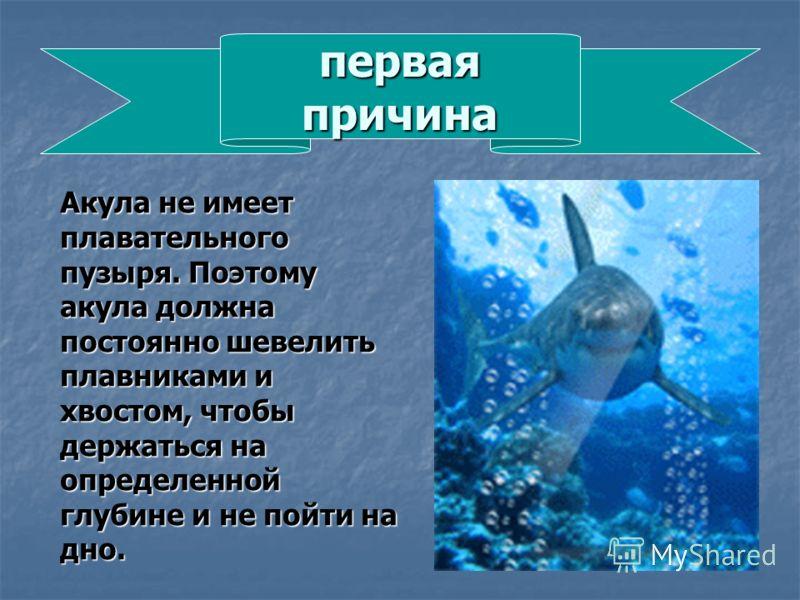 первая причина Акула не имеет плавательного пузыря. Поэтому акула должна постоянно шевелить плавниками и хвостом, чтобы держаться на определенной глубине и не пойти на дно.