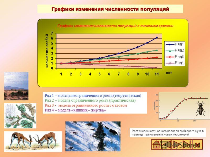 Ряд 1 – модель неограниченного роста (теоретическая) Ряд 2 – модель ограниченного роста (практическая) Ряд 3 - модель ограниченного роста с отловом Ряд 4 – модель «хищник – жертва» Рост численности одного из видов амбарного жука в пшенице при освоени