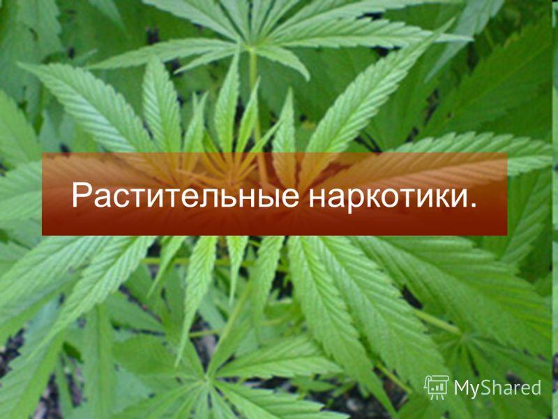 Растительные наркотики.