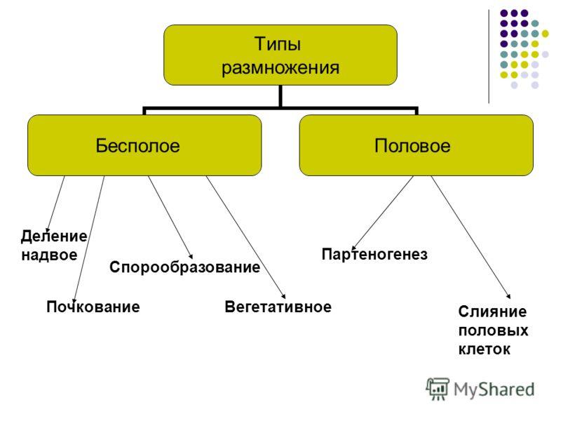 Типы размножения БесполоеПоловое Деление надвое Спорообразование Вегетативное Партеногенез Слияние половых клеток Почкование