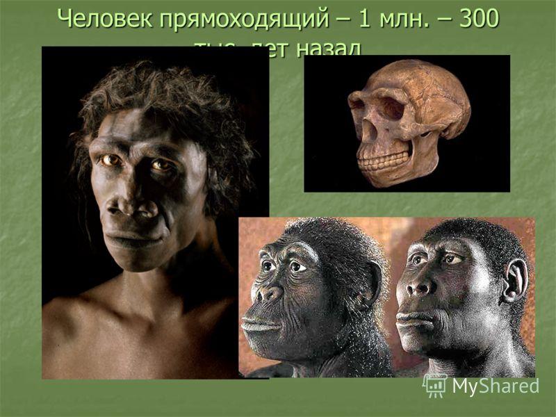 Человек прямоходящий – 1 млн. – 300 тыс. лет назад