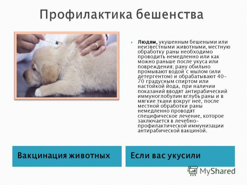 Вакцинация животныхЕсли вас укусили Людям, укушенным бешеными или неизвестными животными, местную обработку раны необходимо проводить немедленно или как можно раньше после укуса или повреждения; рану обильно промывают водой с мылом (или детергентом)