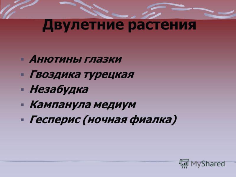 Двулетние растения Анютины глазки Гвоздика турецкая Незабудка Кампанула медиум Гесперис (ночная фиалка)