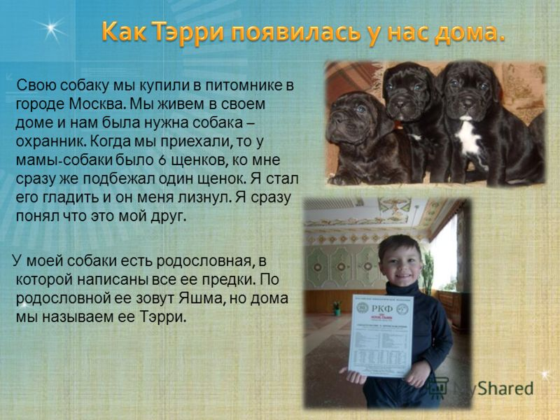 Свою собаку мы купили в питомнике в городе Москва. Мы живем в своем доме и нам была нужна собака – охранник. Когда мы приехали, то у мамы - собаки было 6 щенков, ко мне сразу же подбежал один щенок. Я стал его гладить и он меня лизнул. Я сразу понял