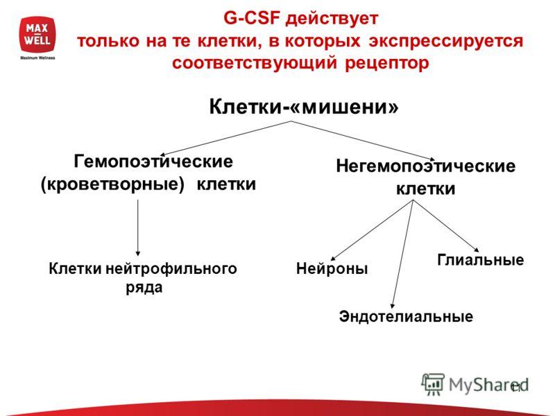 11 G-CSF действует только на те клетки, в которых экспрессируется соответствующий рецептор Гемопоэтические (кроветворные) клетки Негемопоэтические клетки Нейроны Эндотелиальные Глиальные Клетки-«мишени» Клетки нейтрофильного ряда