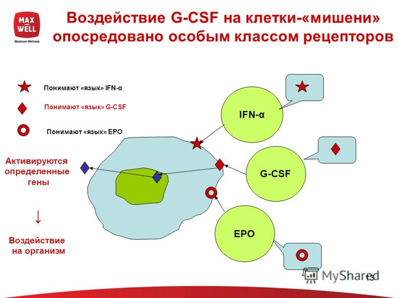 13 Воздействие G-CSF на клетки-«мишени» опосредовано особым классом рецепторов IFN-α EPO G-CSF Понимают «язык» IFN-α Понимают «язык» G-CSF Понимают «язык» EPO Активируются определенные гены Воздействие на организм