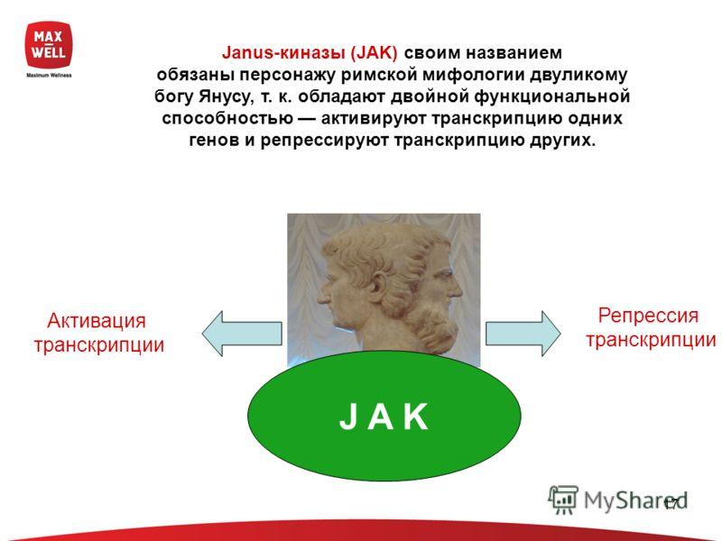 17 Janus-киназы (JAK) своим названием обязаны персонажу римской мифологии двуликому богу Янусу, т. к. обладают двойной функциональной способностью активируют транскрипцию одних генов и репрессируют транскрипцию других. Активация транскрипции Репресси