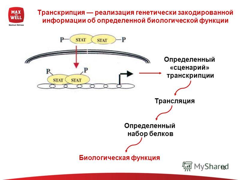 18 Транскрипция реализация генетически закодированной информации об определенной биологической функции Определенный «сценарий» транскрипции Трансляция Определенный набор белков Биологическая функция