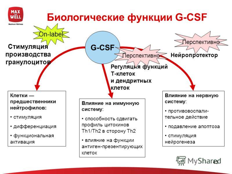 43 G-CSF Биологические функции G-CSF Клетки предшественники нейтрофилов: стимуляция дифференциация функциональная активация Влияние на иммунную систему: способность сдвигать профиль цитокинов Th1/Th2 в сторону Th2 влияние на функции антиген-презентир