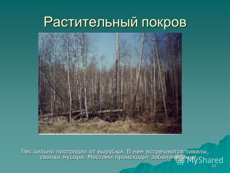 12 Растительный покров Лес сильно пострадал от вырубки. В нём встречаются завалы, свалки мусора. Местами происходит заболачивание.