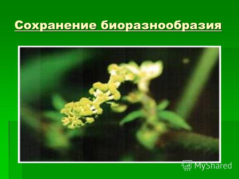 Сохранение биоразнообразия