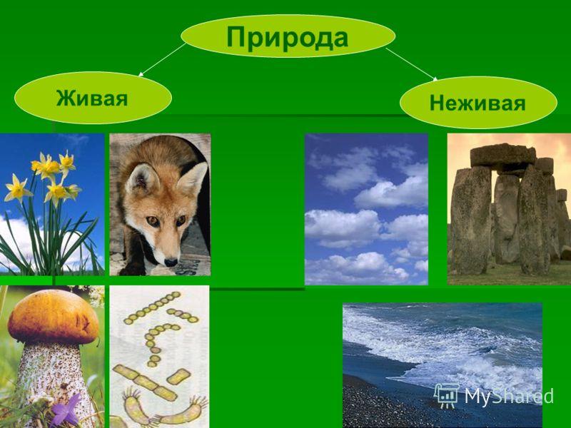 Природа Живая Неживая
