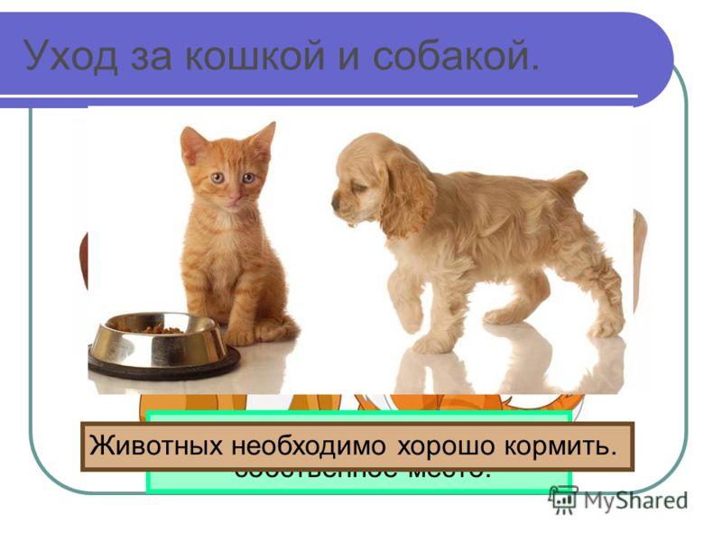 Уход за кошкой и собакой. У кошки и собаки должно быть собственное место. Животных необходимо хорошо кормить.