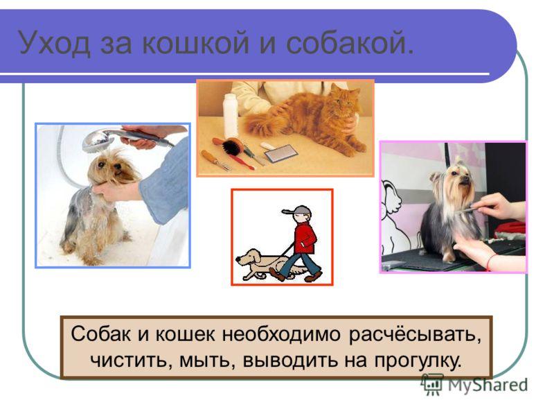 Уход за кошкой и собакой. Собак и кошек необходимо расчёсывать, чистить, мыть, выводить на прогулку.