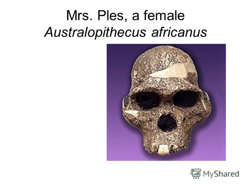 Mrs. Ples, a female Australopithecus africanus